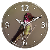 Hummingbird Clock Live WP