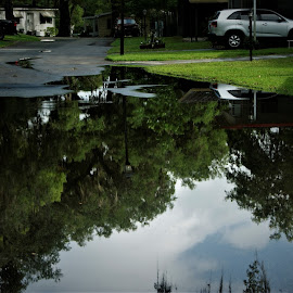 Reflection of Skyline in Rain Puddle by John Wright - City,  Street & Park  Street Scenes ( puddle, reflections, trees, water )