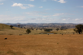 Photo: Year 2 Day 227 - Scenery Off the Side of the Hume Highway
