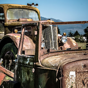 Rusted Relics by Craig Pifer - Transportation Automobiles ( car, oregon, grass, automobile, transportation, rust, old truck, coast )