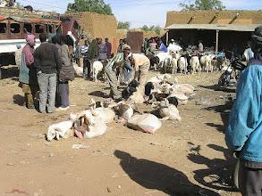 Photo: kozy przygotowane do transportu