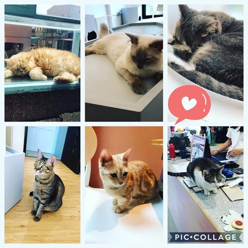 餐點美味又健康無負擔😊😊 還有很多迷人的貓小孩陪你🐱🐱🐱 店家服務親切氣氛美好 待了一個下午的時光也不為過❤️❤️