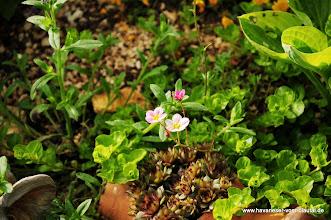 Photo: Ob unser Ziel erreicht wird immer etwas Blühendes im Steingarten zu haben