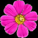 FlowerShower icon