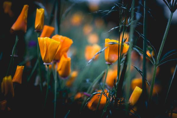 Fiori arancioni di cui non conosco il nome