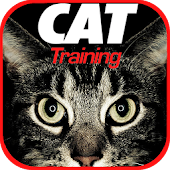 Cat Training