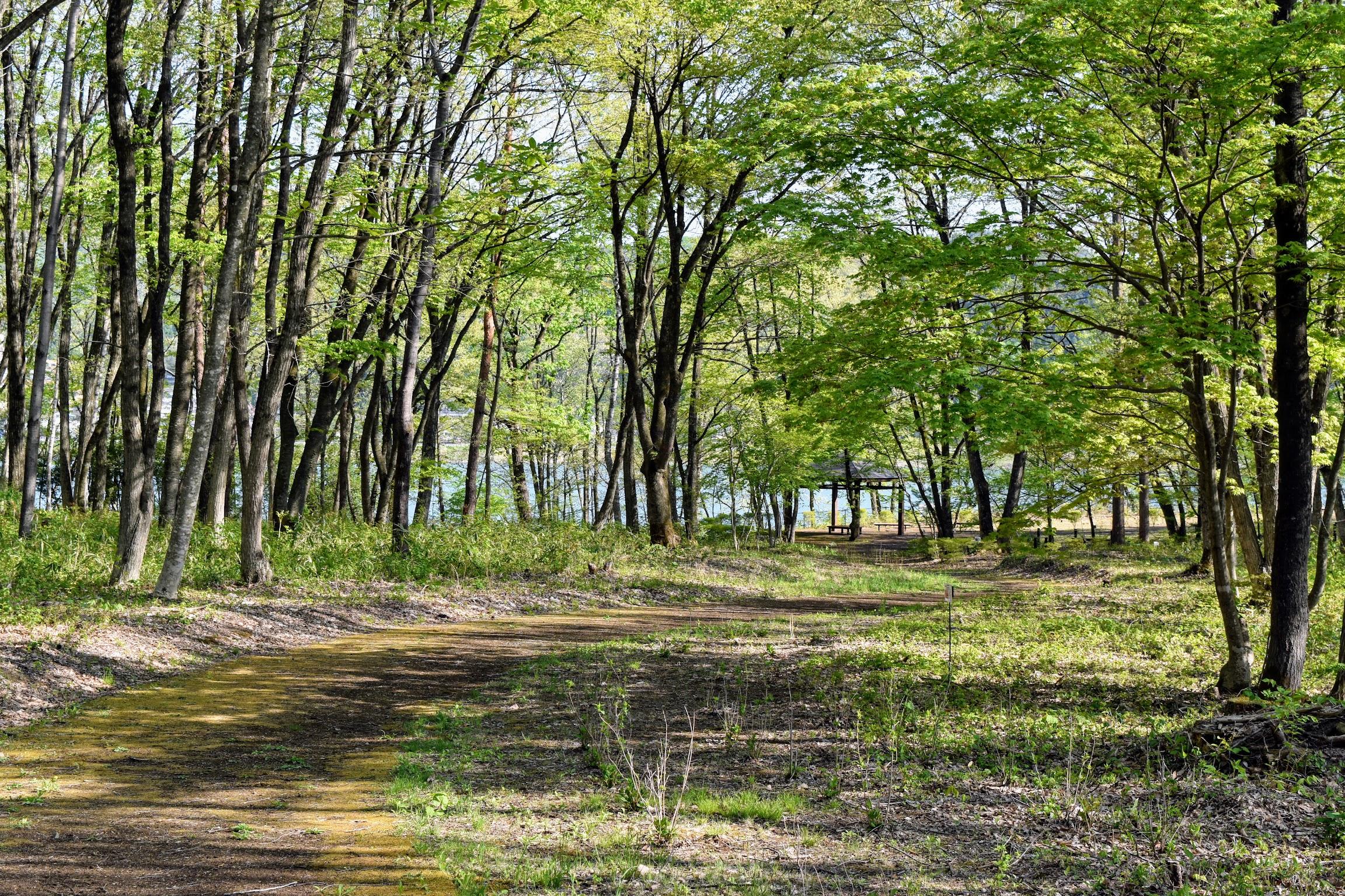 御所湖広域公園・繋大橋北園地「木漏れ日の散歩道」