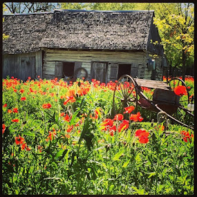 Castroville, TX by Roxana McRoberts - Instagram & Mobile iPhone
