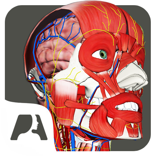 Pocket Anatomy Pro app for Android