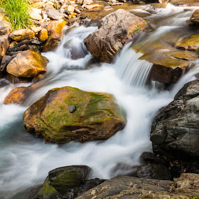 Creek by Jay Chen - Nature Up Close Water