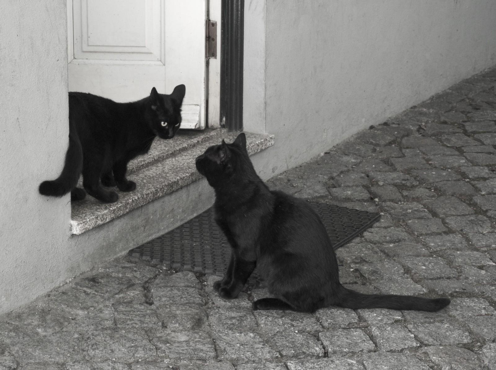 Mijn kat heeft ruzie met een kat van de buren. Hoe kan ik de situatie helpen kalmeren?