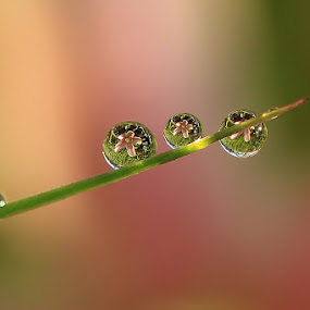 dews by Yenni Sumita - Nature Up Close Water