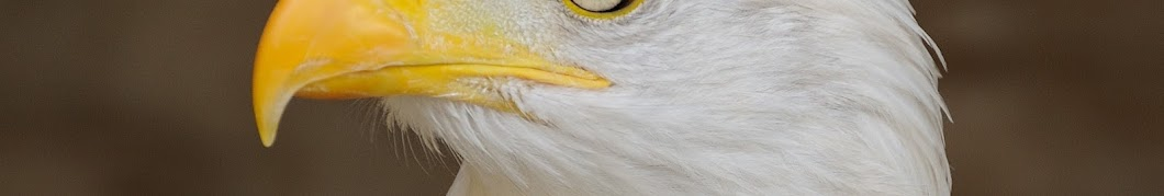 Turbo Conquering Mega Eagle Banner