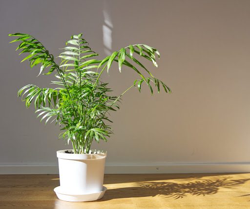 5 Easiest Indoor Plants To Care For That Are Extremely Difficult To Kill