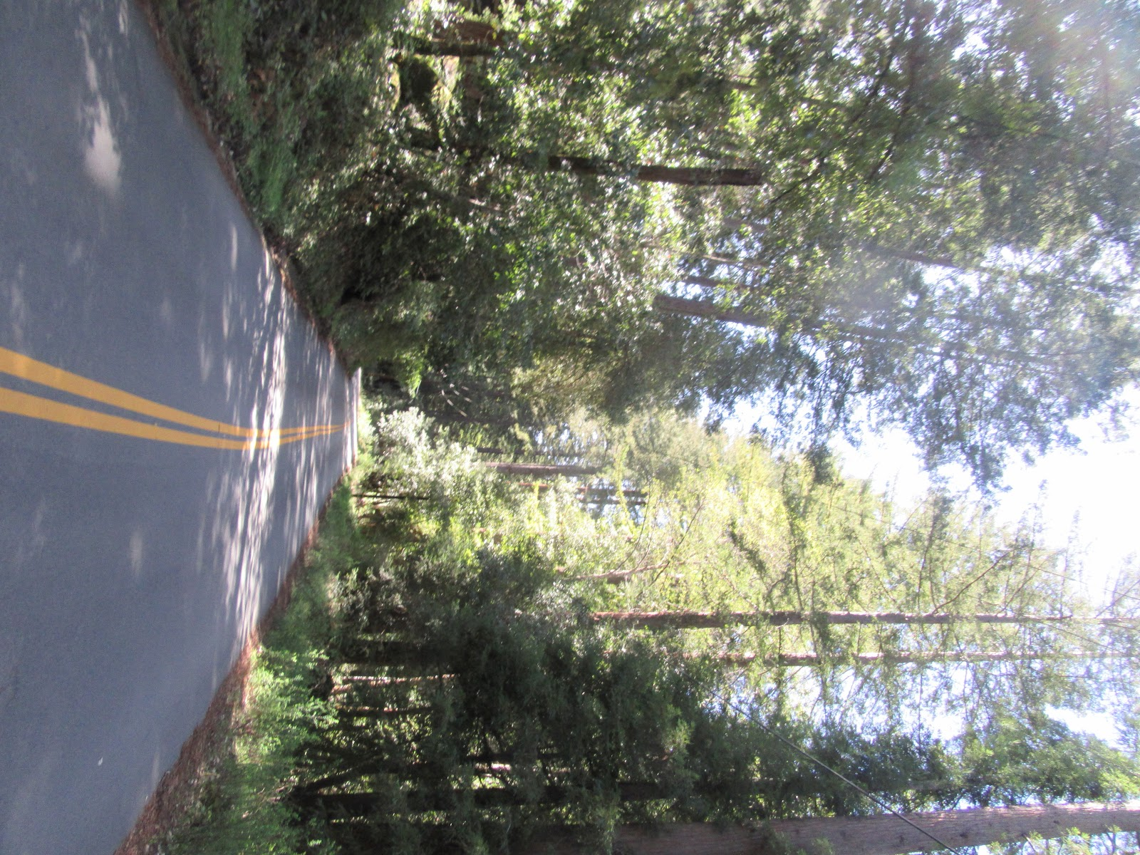 Climbing Jamison Road  by bike - roadway bordered by redwood trees