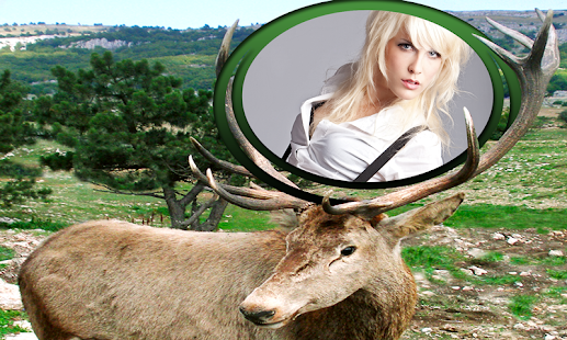 divoká zvířata fotorámečky - náhled