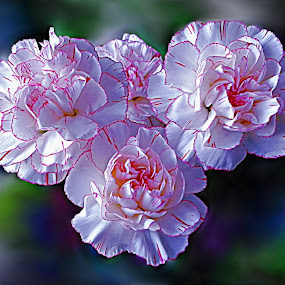 White Glory by Diana Postill - Nature Up Close Flowers - 2011-2013 ( market, nature, blossom, flower, closeup )