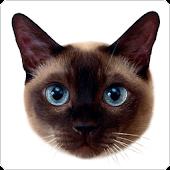 Stickers: Animals