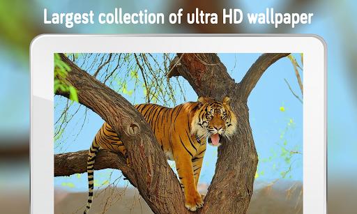 Tiger Wallpaper (4k)  screenshots 2
