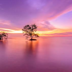 Minimalist Mangrove by Edwin Ng - Landscapes Sunsets & Sunrises ( pantai, sunset, malaysia, mangrove, jeram )
