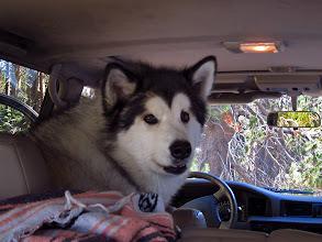 Photo: Taiya, Will and Jane's beautiful dog #2807