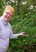 Photo: We ate two handfuls of blackberries