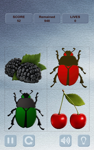 Berries and Bugs