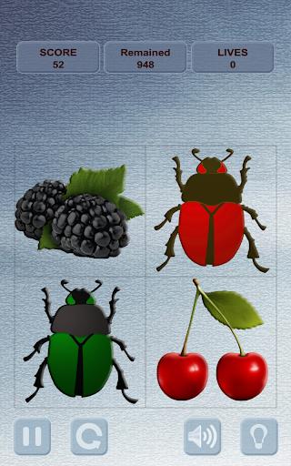 ベリーと甲虫 Berries and Beetles