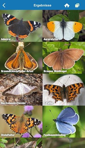 NABU Insektenwelt - Insekten Entdecken & Bestimmen 1.42 screenshots 2