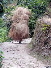 Photo: Scheinbar laufen hier Strohschober herum, es sind jedoch Bauern, die Reisstroh transportieren.