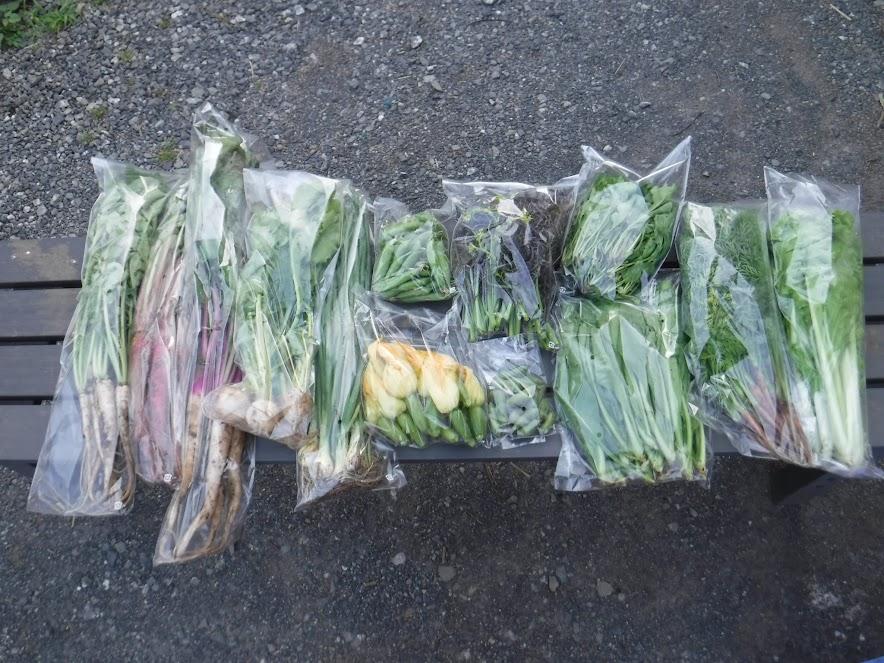 5/14のお野菜セット なんでもOKのお客様に13種類用意できました。