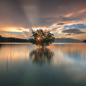 Crowning Glory by Dinno Sandoval - Landscapes Waterscapes ( landscape sunrise mangroves philippines triboa subic olongapo tourism )