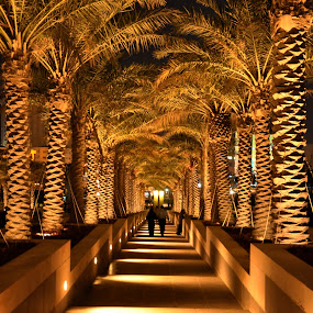 Steps leading to Museum of Islamic Art, Qatar by Sarita Jithin - Buildings & Architecture Other Exteriors