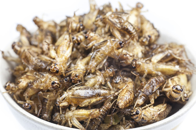 Insects are already being touted by some as the future of food, with a new study finding that eating crickets may also be beneficial for our guts.