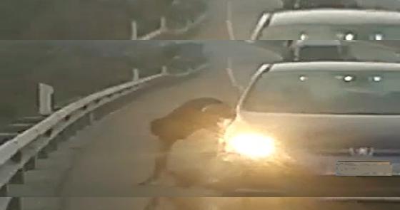 El vídeo de la brutal paliza que mató a un hombre en plena autovía