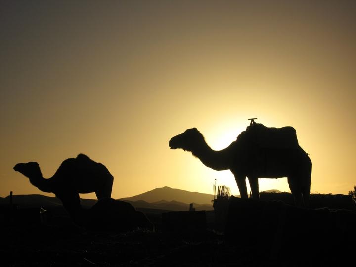 Alba nel Deserto di realsandro