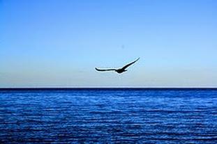 libertà ali di gabbiano