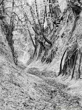 Photo: Wąwóz Świętej Królowej Jadwigi