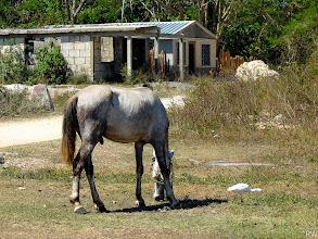 Photo: Этот просто перекормленый конь.