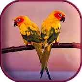 Beautiful Birds Live Wallpaper