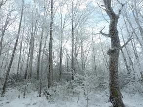 Photo: Sunny snow