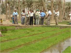 Photo: Farmers gather near nursery seedling boxes, 2010 [Photo provided by  Khidir A. Hammed]