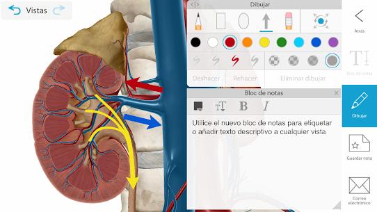 Atlas de anatomía humana 2021 4