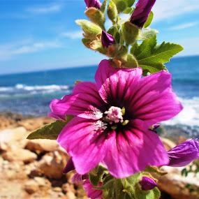 By the sea by Elenka Smilenova - Flowers Flower Buds ( flower garden sea )