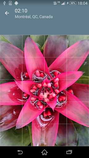 Jigsaw Puzzle: Flowers screenshot 4