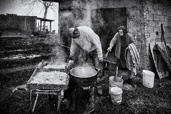 Chef da pollaio di felixpedro