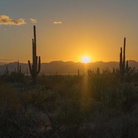 Desert Sunset by Drew Campbell - Landscapes Deserts