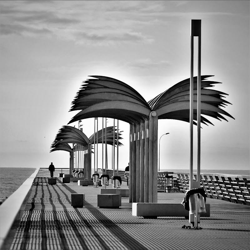 Alicante, città delle palme di ely50