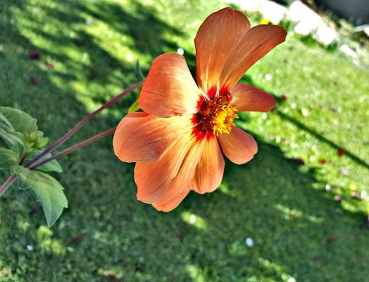 Primavera in fiore di KrissPad