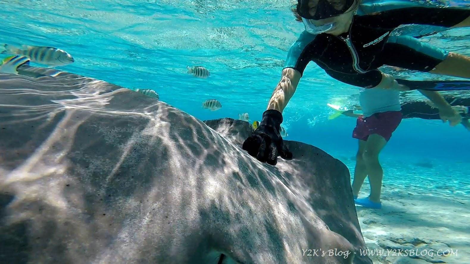 Ale accarezza un trigone di notevoli dimensioni - Bora Bora